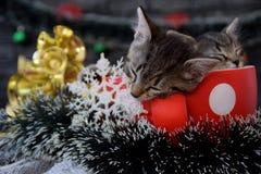 Los gatitos lindos están durmiendo entre las decoraciones del ` s del Año Nuevo Foto de archivo libre de regalías