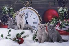 Los gatitos negros en una Navidad adornaron el fondo Foto de archivo libre de regalías