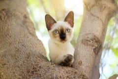 Los gatitos son el jugar travieso en un árbol en el jardín imagen de archivo