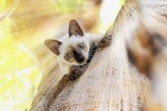 Los gatitos son el jugar travieso en un árbol en el jardín fotografía de archivo