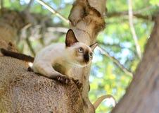 Los gatitos son el jugar travieso en un árbol en el jardín imagen de archivo libre de regalías