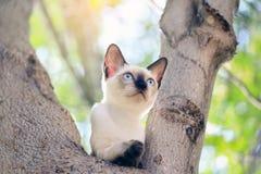 Los gatitos son el jugar travieso en un árbol en el jardín foto de archivo