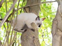 Los gatitos son el jugar travieso en un árbol en el jardín fotos de archivo libres de regalías