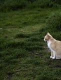 Los gatos abandonaron la calle foto de archivo libre de regalías