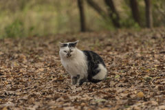 Los gatos en otoño hojean bosque Fotos de archivo
