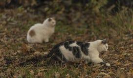 Los gatos en otoño hojean bosque Imagen de archivo libre de regalías