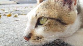 Los gatos femeninos están mirando adelante Fotos de archivo libres de regalías
