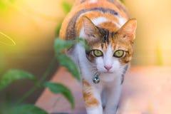 Los gatos lindos están jugando en la casa en césped usando el papel pintado o el fondo para la imagen animal Fotografía de archivo