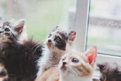 Los gatos lindos son divertidos Foto de archivo