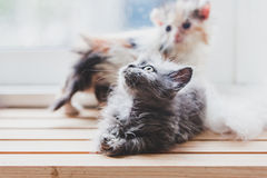 Los gatos lindos son divertidos Imágenes de archivo libres de regalías