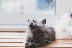 Los gatos lindos son divertidos Imagen de archivo libre de regalías