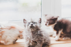 Los gatos lindos son divertidos Foto de archivo libre de regalías