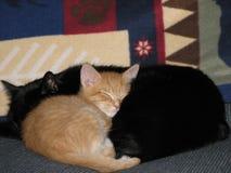 Los gatos se calientan y 1 acogedor Imagenes de archivo