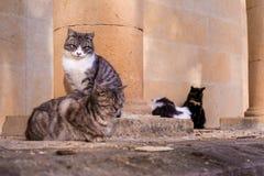 Los gatos se sientan en una piedra y caen dormido imagen de archivo libre de regalías