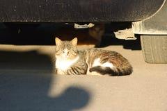 Los gatos sin hogar se sientan debajo del coche iluminado por el sol del verano del ajuste fotos de archivo libres de regalías