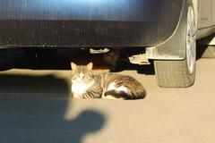 Los gatos sin hogar se sientan debajo del coche iluminado por el sol del verano del ajuste fotos de archivo
