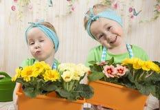 Los gemelos de las muchachas de tres años cuidan para las flores, Imagen de archivo libre de regalías