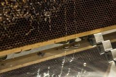 Los goteos dulces de la miel del peine de oro amarillo brillante de la miel fluyen durante fondo de la cosecha con el textspace Imagen de archivo libre de regalías