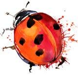 Los gráficos de la camiseta del escarabajo de mariquita, ejemplo de la mariquita con la acuarela del chapoteo texturizaron el fon Foto de archivo