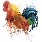 Los gráficos de la camiseta del gallo, ejemplo del gallo con la acuarela del chapoteo texturizaron el fondo moda del gallo de la  Imagen de archivo