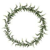 Los gráficos de vector del bosquejo de la rama de la hoja del eucalipto