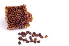 Los gránulos de la abeja y un pedazo de células de la miel se aíslan en un fondo blanco Remedio natural para el aumento de la inm Fotos de archivo libres de regalías
