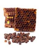 Los gránulos del pan de la abeja y un pedazo de células de la miel se aíslan en un fondo blanco Remedio natural para el aumento d Foto de archivo libre de regalías