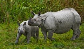 Los grandes rinocerontes uno-de cuernos femeninos y su becerro Foto de archivo libre de regalías