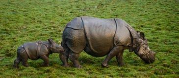 Los grandes rinocerontes uno-de cuernos femeninos y su becerro Imagenes de archivo