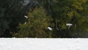 Los granizos caen en el travesaño de la ventana durante la lluvia del otoño metrajes