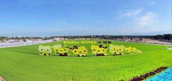 Los granjeros crean hola a Kitty Images en un campo del arroz Imagen de archivo