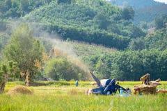 Los granjeros están tomando el arroz del grano Fotografía de archivo