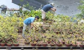 Los granjeros están tomando el cuidado de la flor ornamental de los bonsais en el mercado Imágenes de archivo libres de regalías