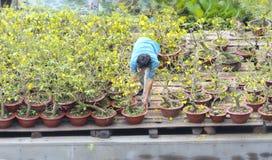 Los granjeros están tomando el cuidado de la flor ornamental de los bonsais en el mercado Imagen de archivo