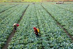 Los granjeros están trabajando Foto de archivo libre de regalías