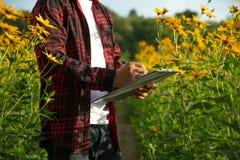 Los granjeros examinan las flores soleadas del verano cultivan imagenes de archivo