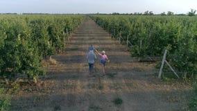 Los granjeros jovenes mamá y papá con el pequeño hijo están caminando en manzanar entre las filas durante la cosecha almacen de metraje de vídeo