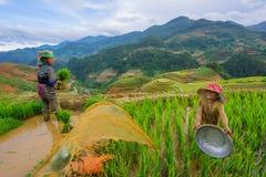Los granjeros no identificados hacen trabajo de la agricultura en sus campos el 13 de junio de 2015 en MU Cang Chai, Yen Bai, Vie Imagenes de archivo