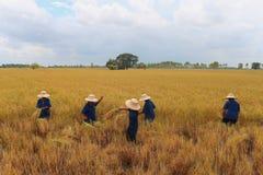 Los granjeros son cosecha Fotos de archivo