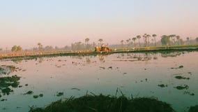 Los granjeros trabajan en un campo del arroz El volar de los pájaros metrajes
