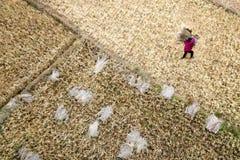 Los granjeros y producen el arroz Fotos de archivo libres de regalías