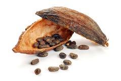 Los granos de cacao en el cacao dan fruto foto de archivo libre de regalías