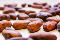 Los granos de cacao se cierran para arriba foto de archivo