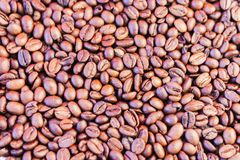 Los granos de café broncean el fondo - espacio de la copia para el texto fotos de archivo libres de regalías