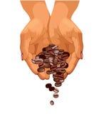 Los granos de café están cayendo abajo Imágenes de archivo libres de regalías