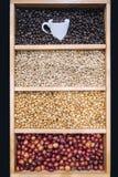 Los granos de café exhiben las diversas etapas del verde de la asación a la oscuridad asadas imagen de archivo