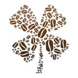 Trébol del grano de café Fotografía de archivo