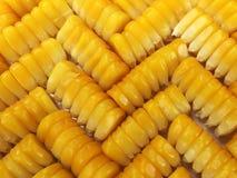Los granos del maíz Imagenes de archivo