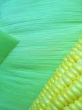 Los granos del maíz con la hoja verde Fotos de archivo libres de regalías