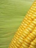 Los granos del maíz con la hoja verde Fotos de archivo